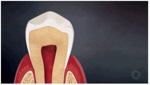 otra buena, esteica por ejemplo u odontologia integral